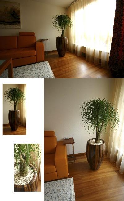 Szenario pflanzen und wohnen unter geri bei zug for Pflanzen wohnzimmer geeignet